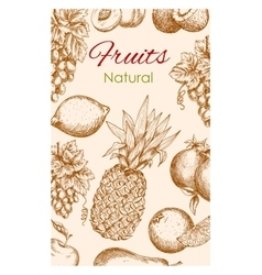 Fruit poster of natural fruits sketch vector