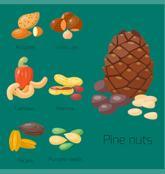 Piles of different nuts hazelnut almond peanut vector