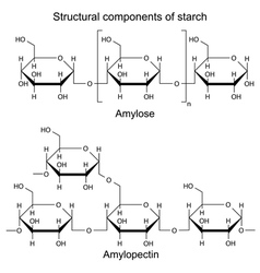 Structural components of starch -chemical formulas vector image