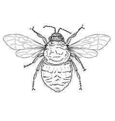 Bumble bee line art vector