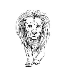 Sketch by pen of a lion front view vector