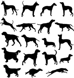 Set of sillhouttes of hunting dogs in point and vector