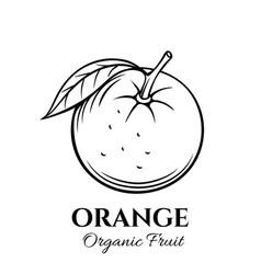 hand drawn orange icon vector image