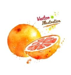 Watercolor grapefruit vector
