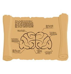 Brain of old scroll Drawing Old brain Diagram vector image vector image