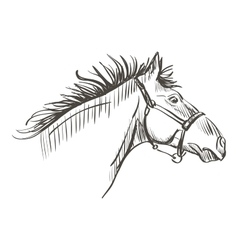 doodle horse vector image vector image