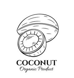 Hand drawn coconut icon vector