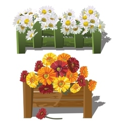 Chamomile and gerbera daisies behind fence vector image