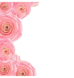 Pink rose border vector