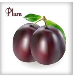Ripe plums with stem vector image vector image