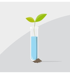 Last plant from a test tube vector