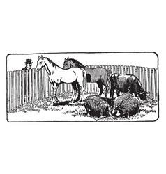 Farm animals in corral vintage vector