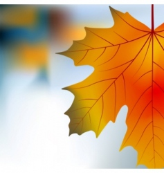 red yellow maple autumnal background vector image vector image