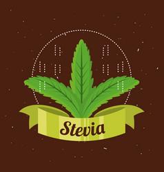 Stevia natural sweetener plant and organic product vector