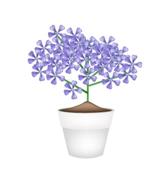 Bunch of violet geranium flowers in a pot vector