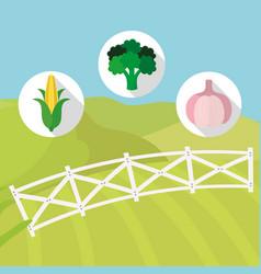 vegetables harvest food farming vector image
