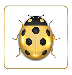 ladybug gold insect small icon vector image