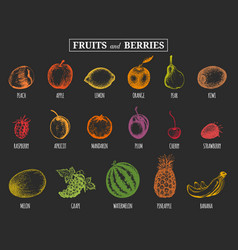 Fruits and berries hand drawn vector