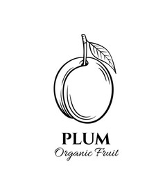 hand drawn plum icon vector image