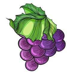 luscious grape vector image