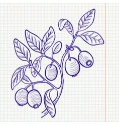 blueberry vector image