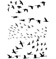 Birds in flight vector image vector image