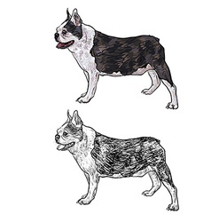 Drawing side of french bulldog vector image vector image
