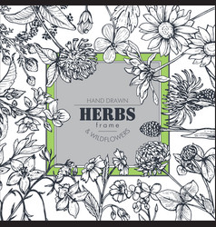 Frame with herb and wildflower elements vector