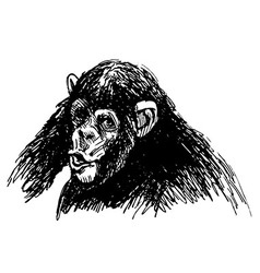 Hand sketch of a young chimpanzee vector