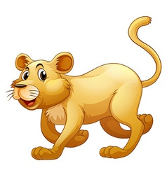 Lion walking alone on whitebackground vector image vector image
