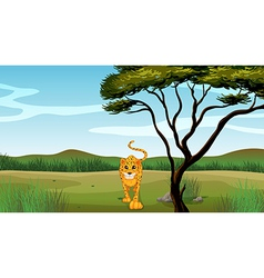 cartoon leopard vector image