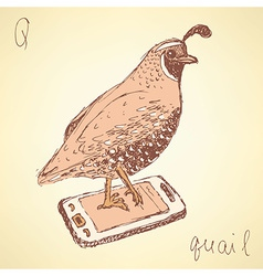 Sketch fancy quail in vintage style vector