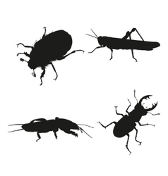 Insects on a white background vector image vector image
