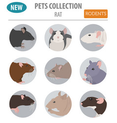 Rat breeds icon set flat style isolated on white vector