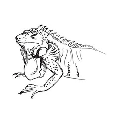Hand sketch of iguana vector image