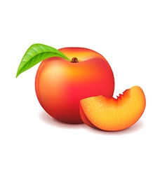 Peach and slice isolated on white vector image