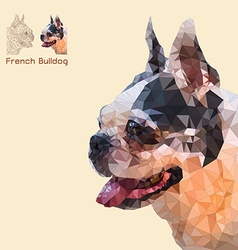 Low poly head french bulldog vector