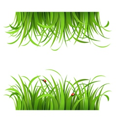 Green grass and ladybirds vector