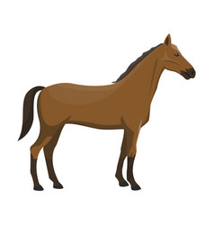 a horse vector image vector image