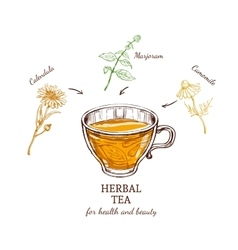 Herbal tea recipe concept vector