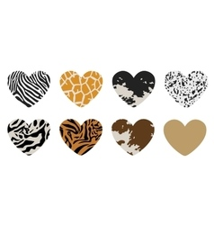 Shape of hearts painted under animal skins vector
