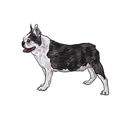 Drawing side of french bulldog vector