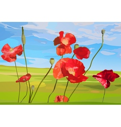Poppy red flowers on field vector