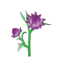 Straw flower vector