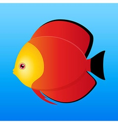 A of a yellow black and red monk discus fis vector