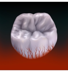 Bloody molar tootheps 10 vector