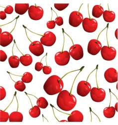 Cherries on white background vector