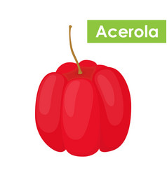 Acerola berry superfoodcartoon flat style vector