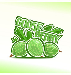 Gooseberry still life vector