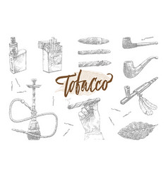 hand drawn tobacco elements set vector image